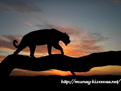 mo_jaguar.jpg