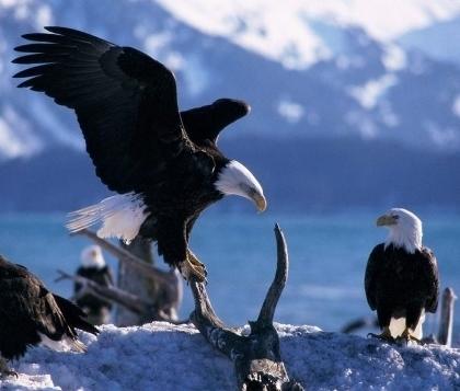 eaglemunay(420x357).jpg